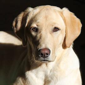 Jennie Marie Schell - Yellow Labrador Retriever Dog Youth