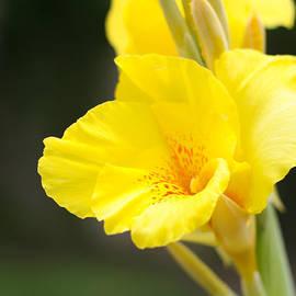 Jeff Mize - Yellow lily