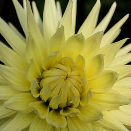 Linda Foakes - Yellow Moods