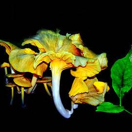 Constance Lowery - Yellow Mushrooms