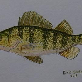 Richard Goohs - Yellow Perch