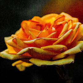 Alexander Senin - Yellow Rose 1