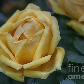 Janice Rae Pariza - Yellow Rose