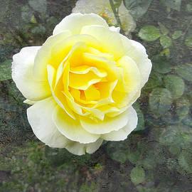 Victoria Harrington - Yellow Rose of Summer