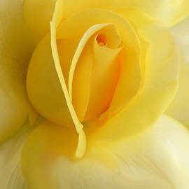 Jennie Marie Schell - Yellow Rose Portrait