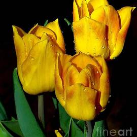 Janette Boyd - Yellow Tulips on Black