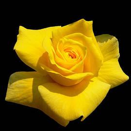 Doug Norkum - Yellow Yearning