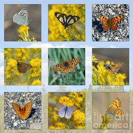 Debra Thompson - Yellowstone Butterflies Collage