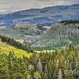 Krista Hott - Yellowstone Rebirth