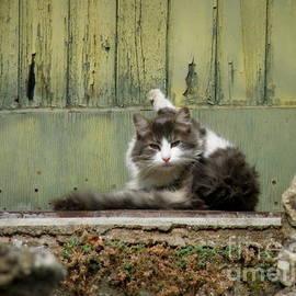 Lainie Wrightson - Yoga Cat