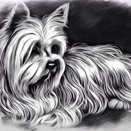 Scott Wallace  - Yorkshire Terrier Sketch
