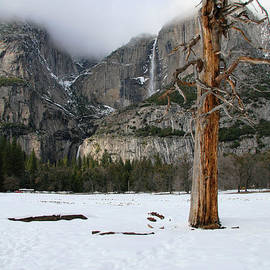 Patricia Sanders - Yosemite in the Dead of Winter