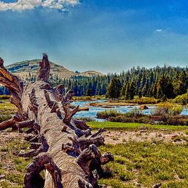 Bob and Nadine Johnston - Yosemite Touloumne Meadows
