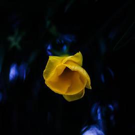 Mario Morales Rubi - You Shine