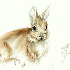 Karen Rispin - Young cottontail