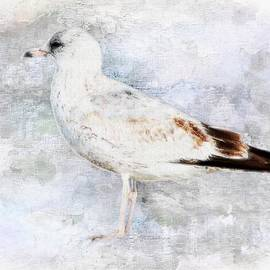 Barbara Chichester - Young Seagull