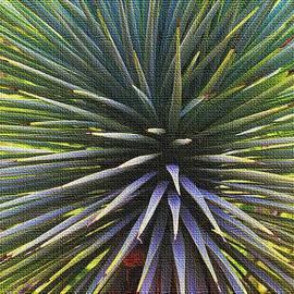 Tom Janca - Yucca At The Arboretum