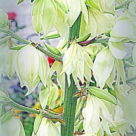 Kay Novy - Yucca Blooms
