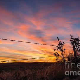 Paul Moore - Yucca Sunset