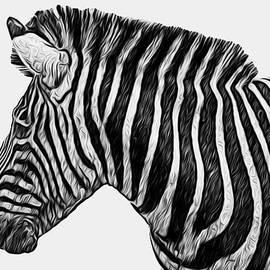 Jack Zulli - Zebra - Happened At The Zoo