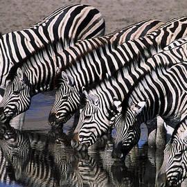 Stefan Carpenter - Zebra Line