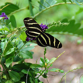 Aimee L Maher Photography and Art - Zebra Longwing Butterfly Floral