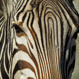 Sandra Selle Rodriguez - Zebra Up Close and Personal
