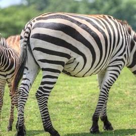 Geraldine Scull   - Mama and baby zebras