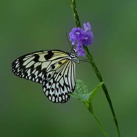 Sandy Keeton -  Butterfly on Flower