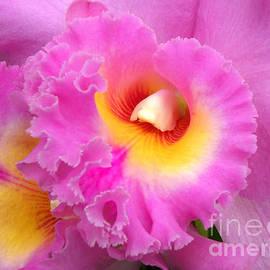 Julie Palencia -  Cattleya Orchid 1