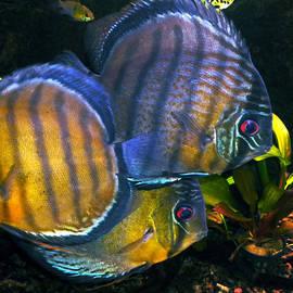Colette V Hera  Guggenheim  -  Fish Joy