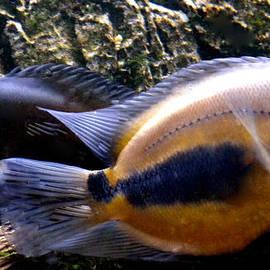 Colette V Hera  Guggenheim  -  FishSwim in Denmark