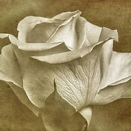Paul and Fe Photography Messenger -  Textured White Rose