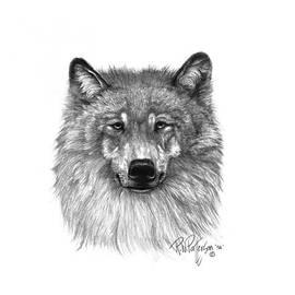 Bob Patterson - Alpha Male Wolf