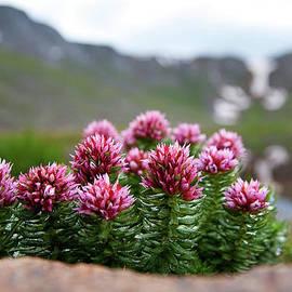 Jim Garrison - Alpine Bouquet