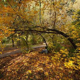 Svetlana Sewell - Autumn Tree