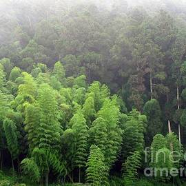 Yali Shi - Bamboo and Cypress Trees