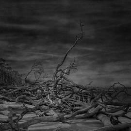 Mario Celzner - Big Talbot Island