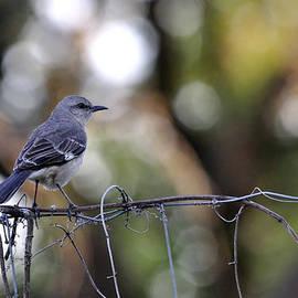 Roy Williams - Bird On A Wire