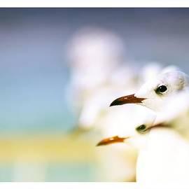 Anusha Hewage - Birds