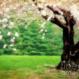 Darren Fisher - Blooms of Spring