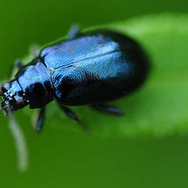Shehan Fernando - Close up of a beetle