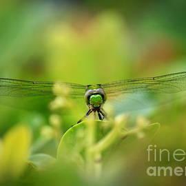 Carol Groenen - Dragonfly Dream in Green