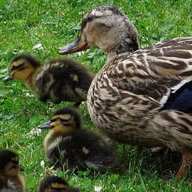 Colette V Hera  Guggenheim  - Duck Family Joy in Garden