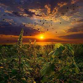 Phil Koch - Early Bird Special