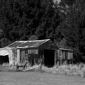 Fran Woods - Horse and Old Barn