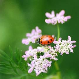 Meeli Sonn - Ladybug