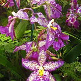 Kerri Ligatich - Orchids - Purple Polka Dots