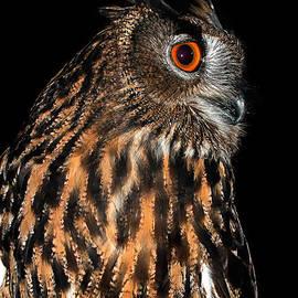 Jean Noren - Side Portrait of an Eagle Owl