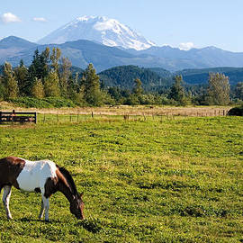 Stacey Lynn Payne - Paint Horse and Mount Rainier
